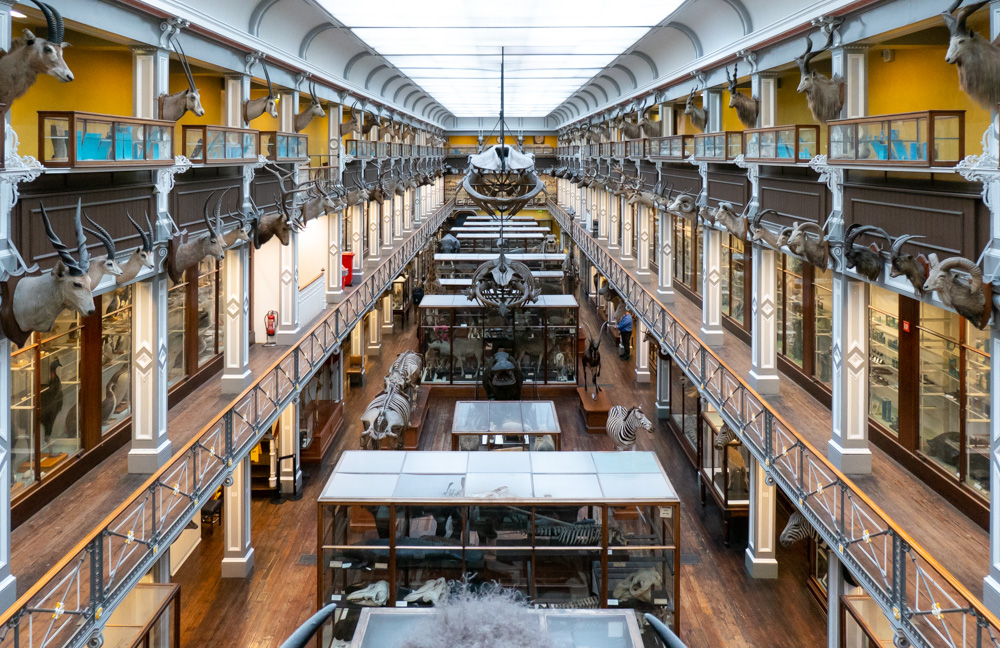 A view of the Museum of Natural History in Dublin, showing galleries lined with trophies of animals heads, glass cases containing stuffed animals along the walls and down the centre of the floor, free-standing skeletons and stuffed animals, and whale skeletons hanging from the glass ceiling.