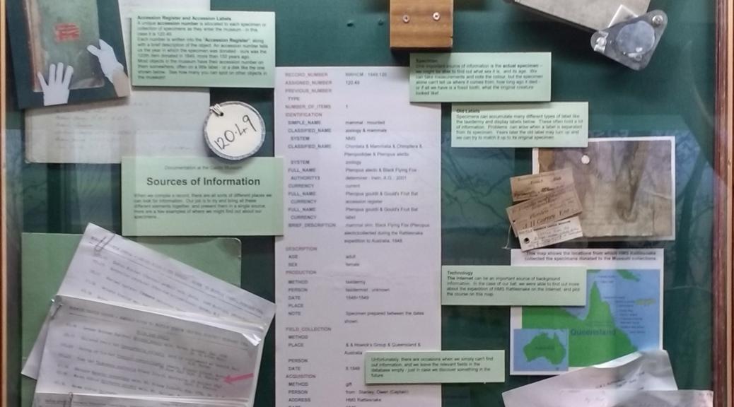 Norwich Castle Museum's documentation display